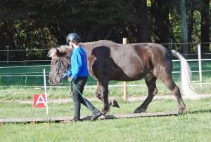 Das Führen eines Pferdes muss man lernen. Hier geht das Pferd brav über eine Holzbrücke.